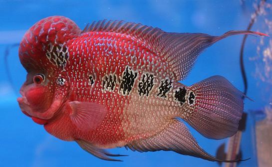Akvaryum balıkları yayın türleri, türleri ve içerikleri